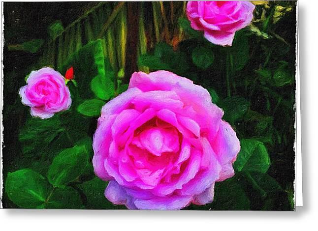 Wonder Of Nature Greeting Card by Blair Stuart