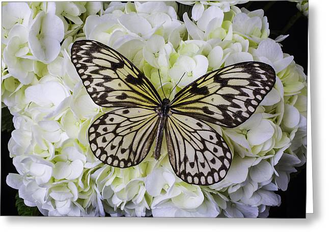 Wonderful Butterfly Greeting Card by Garry Gay