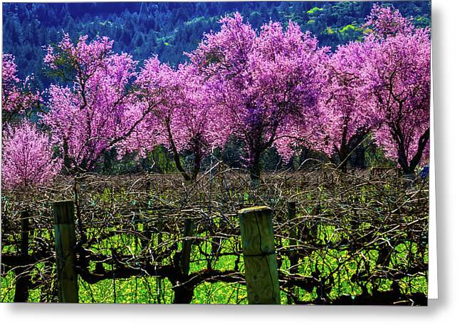 Wonderful Cherry Trees In Vineyards Greeting Card