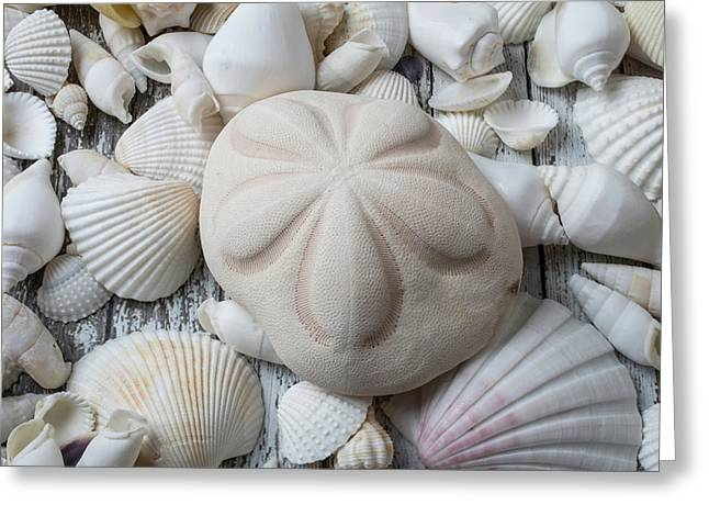 Wonderful Sand Dollar Greeting Card by Garry Gay