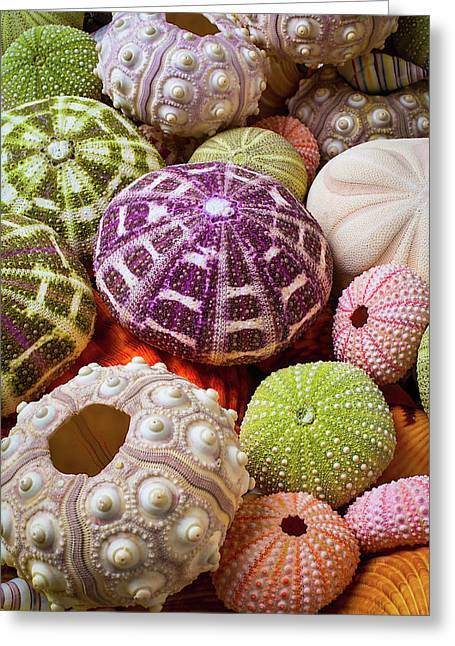 Wonderful Sea Urchins Greeting Card by Garry Gay