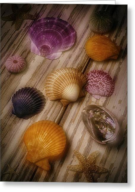 Wonderful Shell Still Life Greeting Card