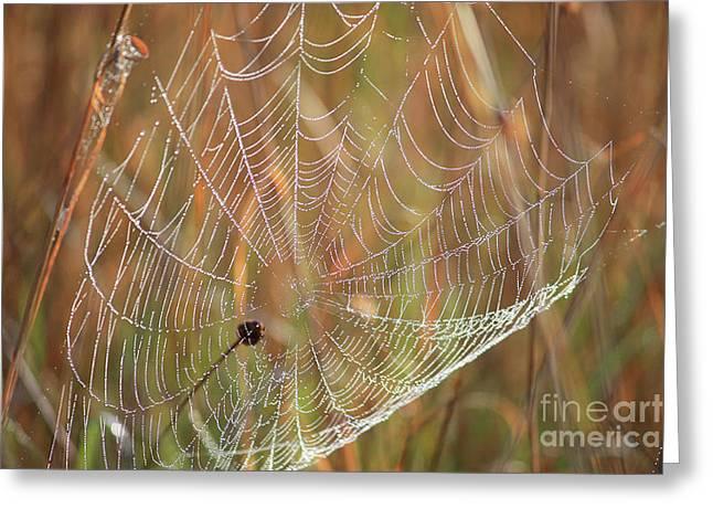 Wonders Of Nature - Dewdrop Web Greeting Card by Carol Groenen