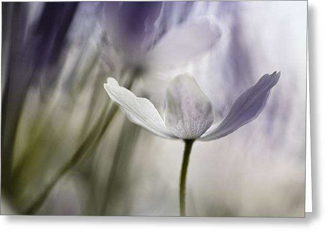 Wood Anemone Abstract Greeting Card