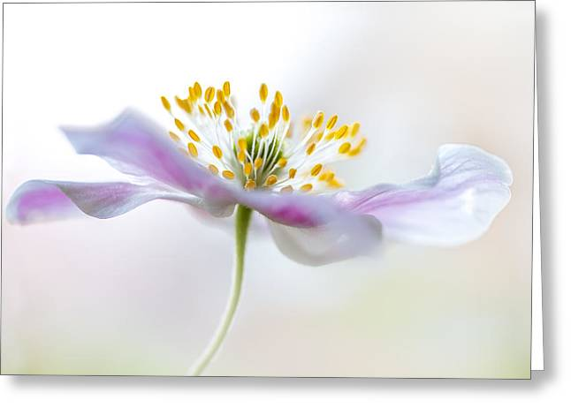 Wood Anemone Greeting Card by Mandy Disher
