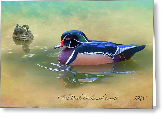 Wood Duck Drake And Female Greeting Card by John Williams