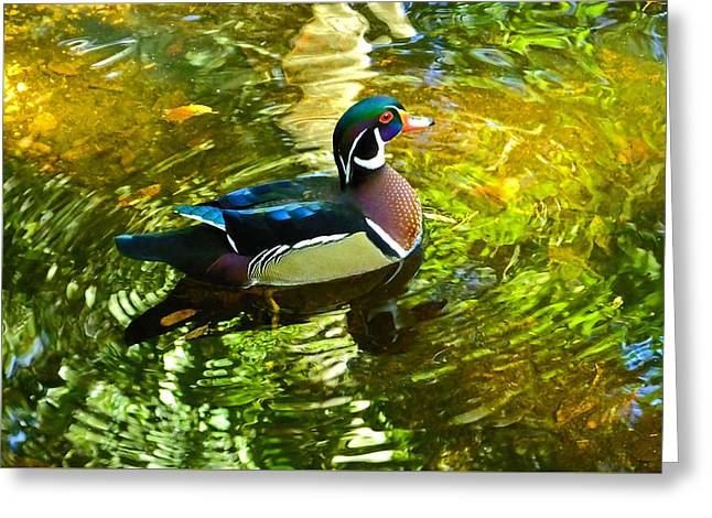 Wood Duck In Lights Greeting Card