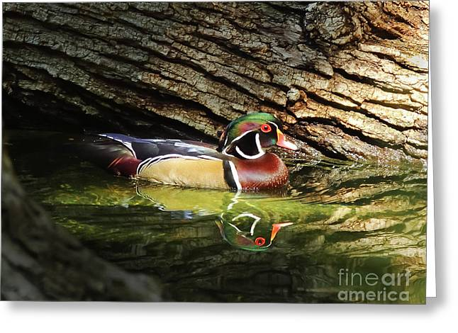 Wood Duck In Wood Greeting Card