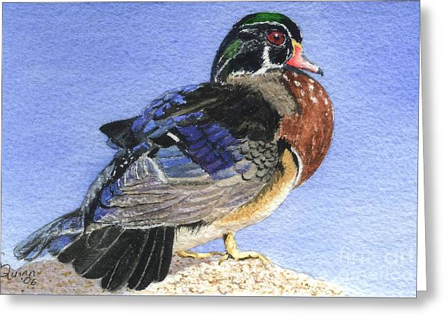 Wood Duck Greeting Card by Lynn Quinn