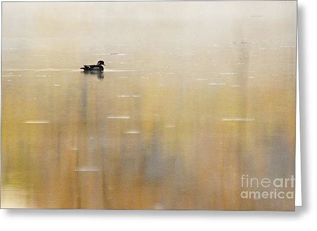 Greeting Card featuring the photograph Wood Duck On Golden Pond by Larry Ricker