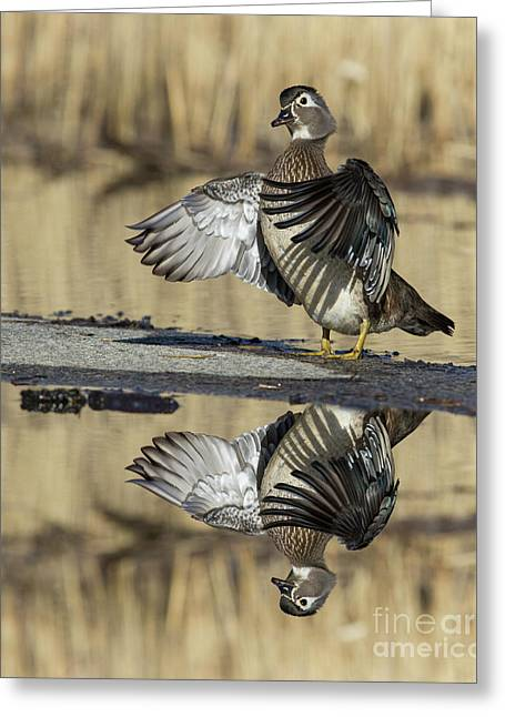 Greeting Card featuring the photograph Wood Duck Reflection by Mircea Costina Photography
