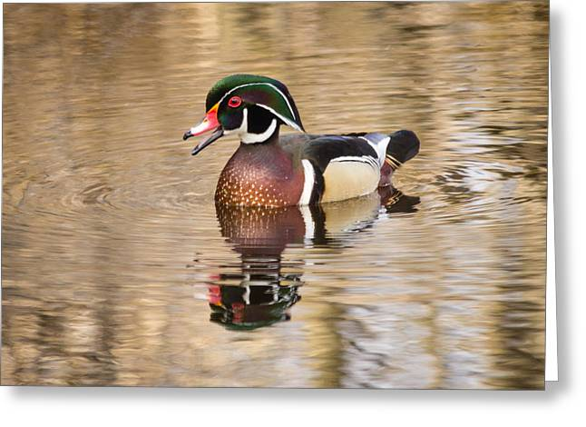 Wood Duck With Reflection Greeting Card