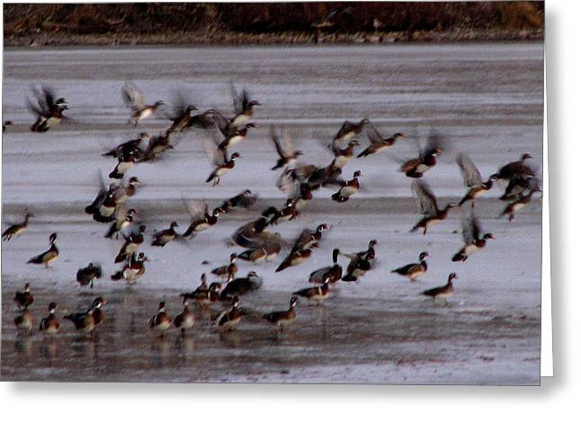 Wood Ducks Greeting Card by Athena Ellis