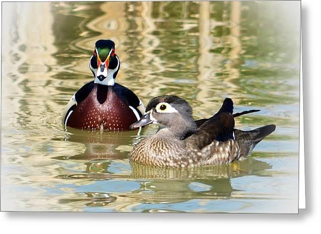 Wood Ducks Greeting Card by Laurie Winn Adams