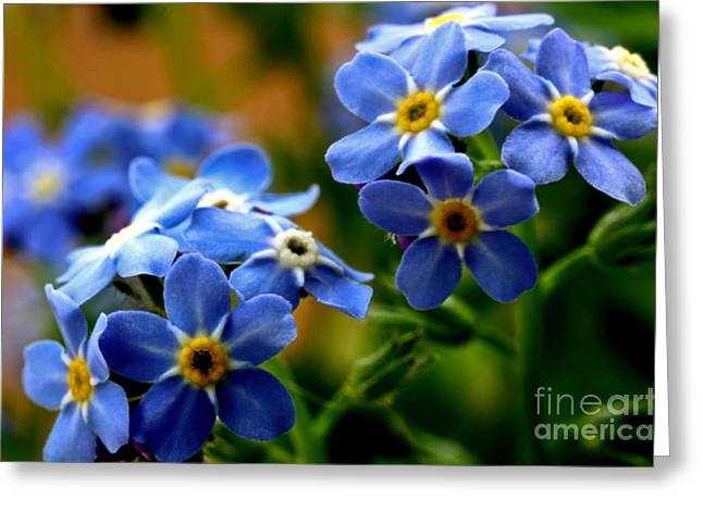 Wood Forget Me Not Blue Bunch Greeting Card