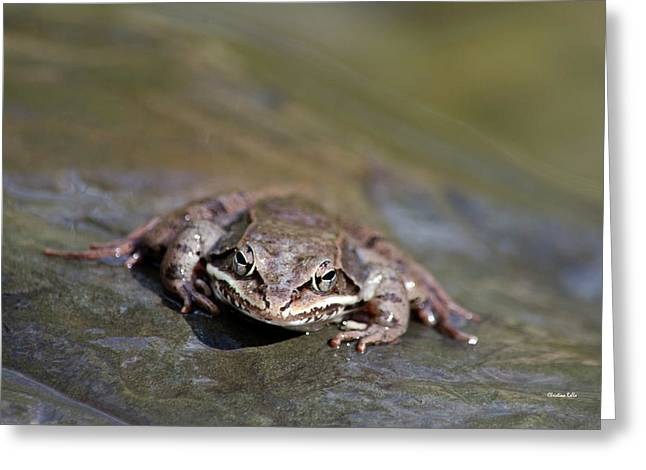 Greeting Card featuring the photograph Wood Frog Close Up by Christina Rollo