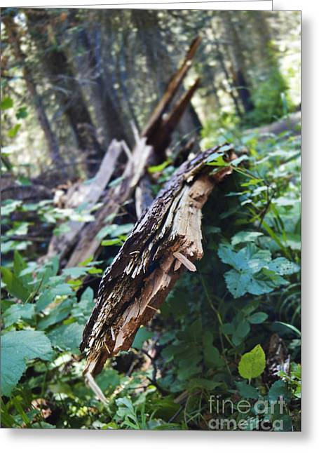 Wood In The Forest Greeting Card by Janie Johnson