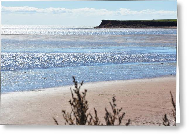 Greeting Card featuring the photograph Wood Islands Beach by Kim Prowse