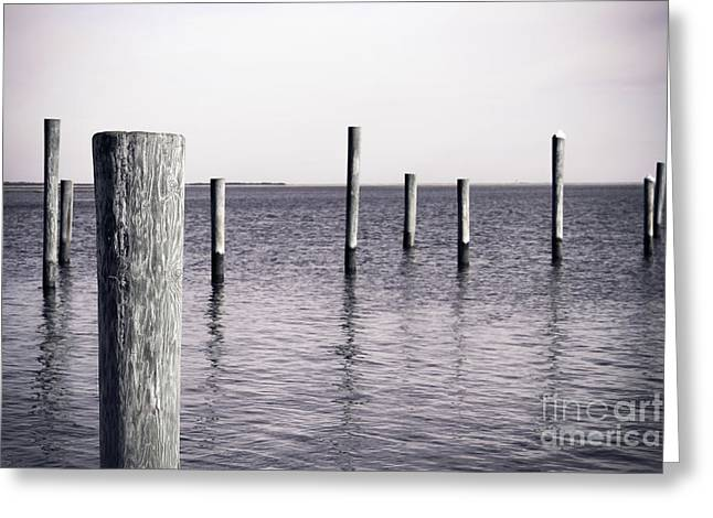 Wood Pilings In Monotone Greeting Card by Colleen Kammerer