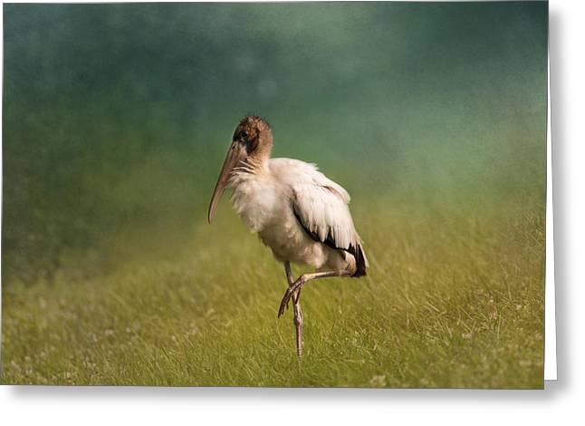 Wood Stork - Balancing Greeting Card by Kim Hojnacki