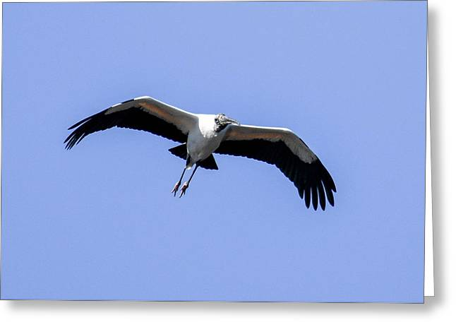 Wood Stork Greeting Card by Gary Wightman