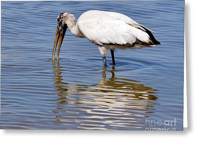 Wood Stork Greeting Card by Louise Heusinkveld