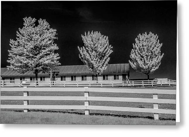 Wood White Fence And Trees In Infrared Greeting Card by Randall Nyhof