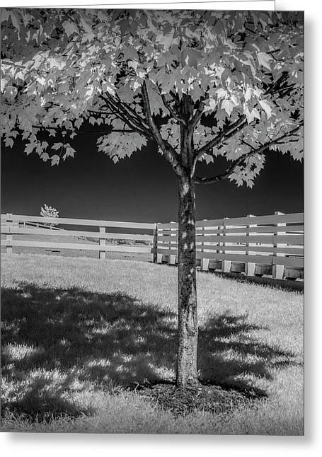 Wood White Fence With Tree In Infrared At The Country Dairy Farm Store Greeting Card by Randall Nyhof