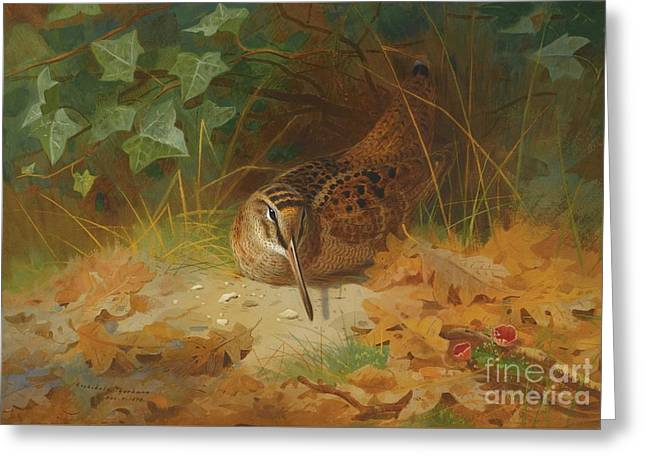 Woodcock Greeting Card by Celestial Images