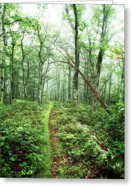 Greeting Card featuring the photograph Wooded Trail by Alan Raasch