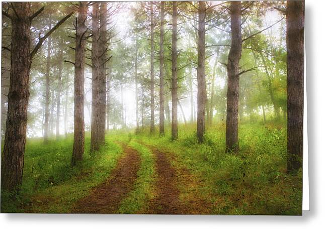 Wooded Trail  Greeting Card by Jennifer Rondinelli Reilly - Fine Art Photography
