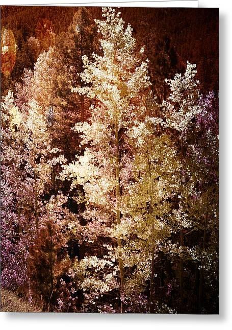 Woodland Beauty Greeting Card by Joseph Frank Baraba