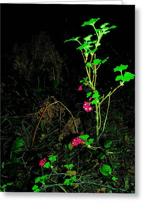 Woodland Bush Greeting Card by Mel Crist