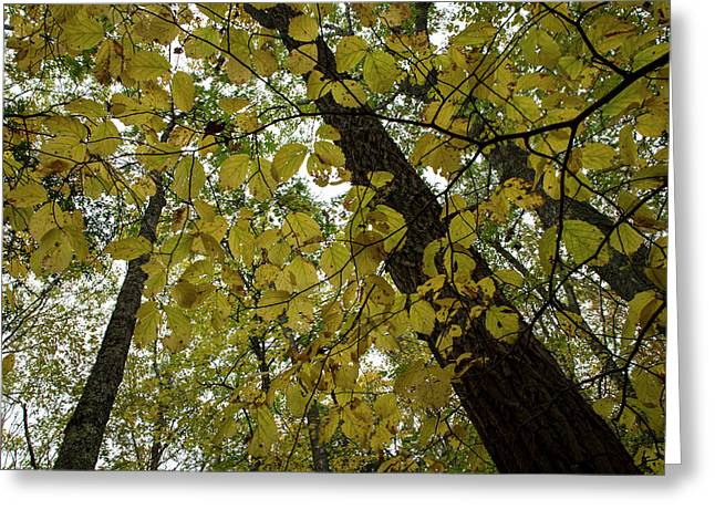 Greeting Card featuring the photograph Woodland Canopy by Andrew Pacheco