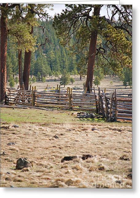Woodland Corral - White Mountains Arizona Greeting Card by Donna Greene