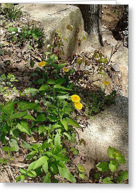 Greeting Card featuring the photograph Woodland Dandelion by Margie Avellino