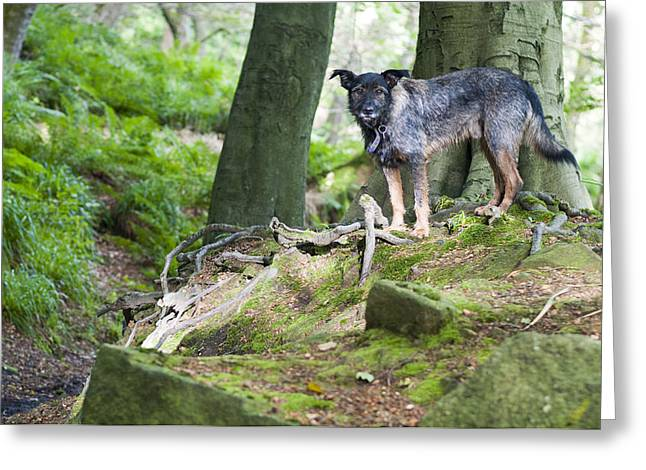 Woodland Dog Greeting Card
