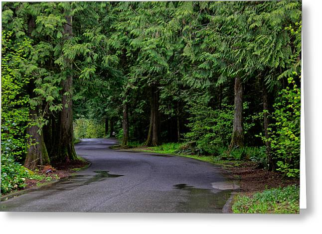 Mountain Road Greeting Cards - Woodland Escape Greeting Card by JerryAnn Berry