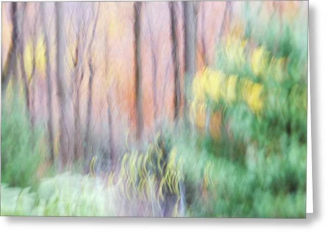 Greeting Card featuring the photograph Woodland Hues 2 by Bernhart Hochleitner