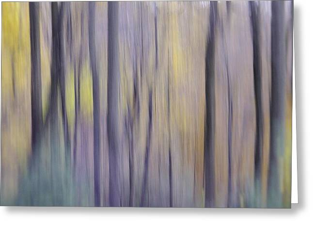 Greeting Card featuring the photograph Woodland Hues by Bernhart Hochleitner