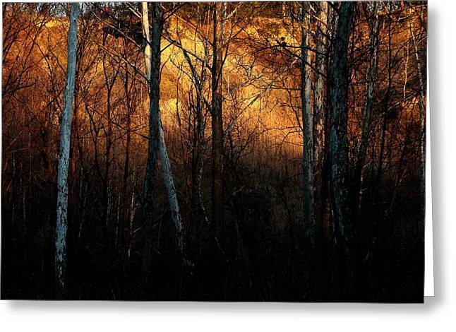Woodland Illuminated Greeting Card