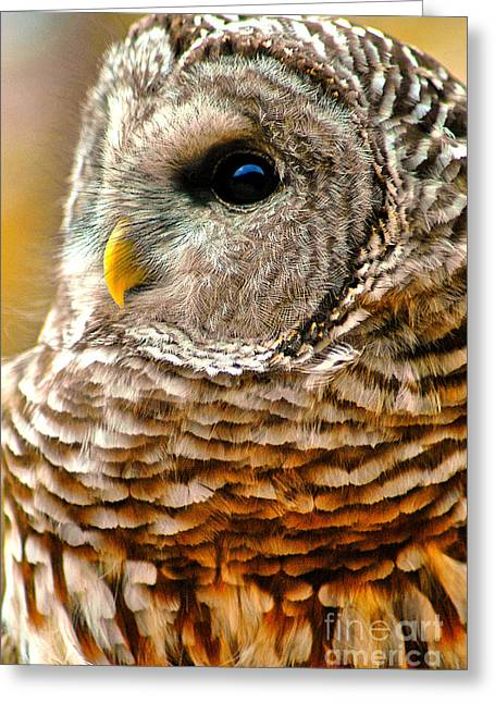 Woodland Owl Greeting Card by Adam Olsen