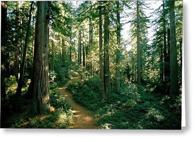 Refuges And Reserves Greeting Cards - Woodland Path Winding Through A Grove Greeting Card by James P. Blair