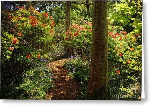 Woodland Path With Rhododendrons Greeting Card