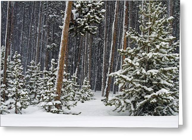 Woodland Snowstorm In Yellowstone Greeting Card