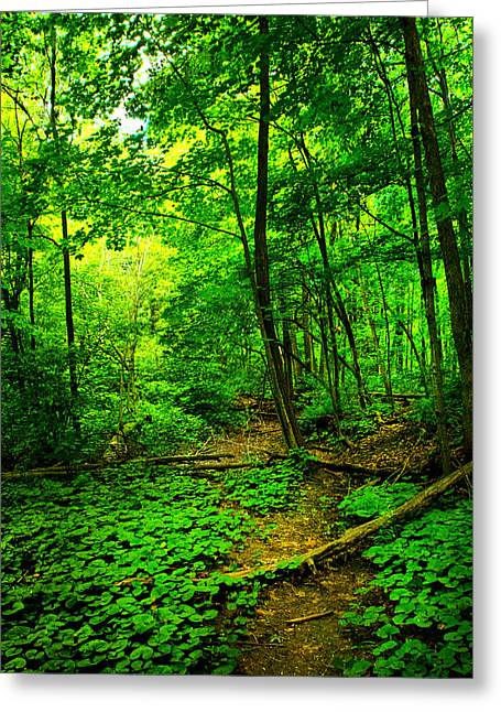 Woodland Way Greeting Card