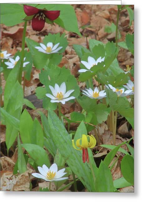 Woodland Wildflowers Greeting Card by John Burk