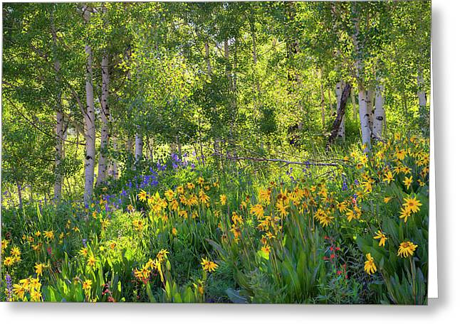 Greeting Card featuring the photograph Woodland Wildflowers by Tim Reaves