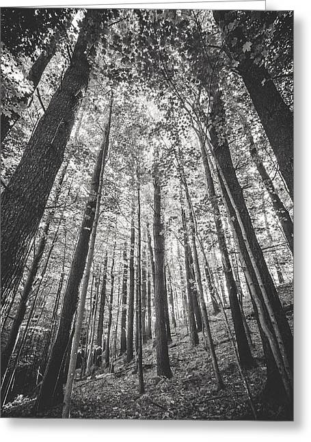 Greeting Card featuring the photograph Woodlands by Robert Clifford