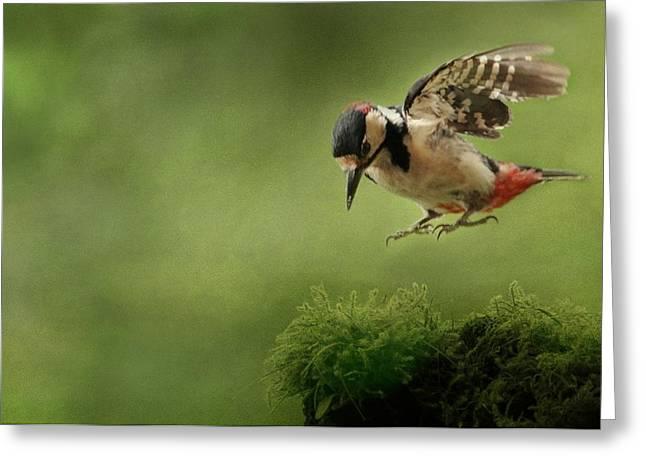 Woodpecker 19 Greeting Card